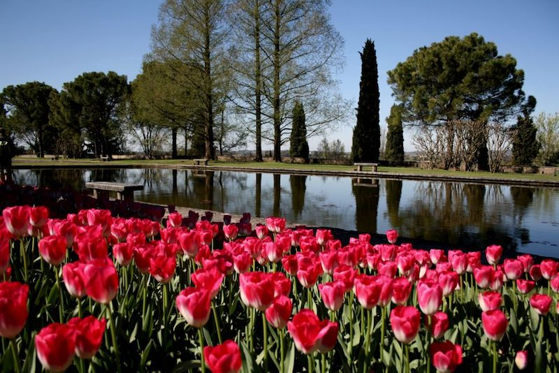 Al Parco Sigurtà torna Tulipanomania!