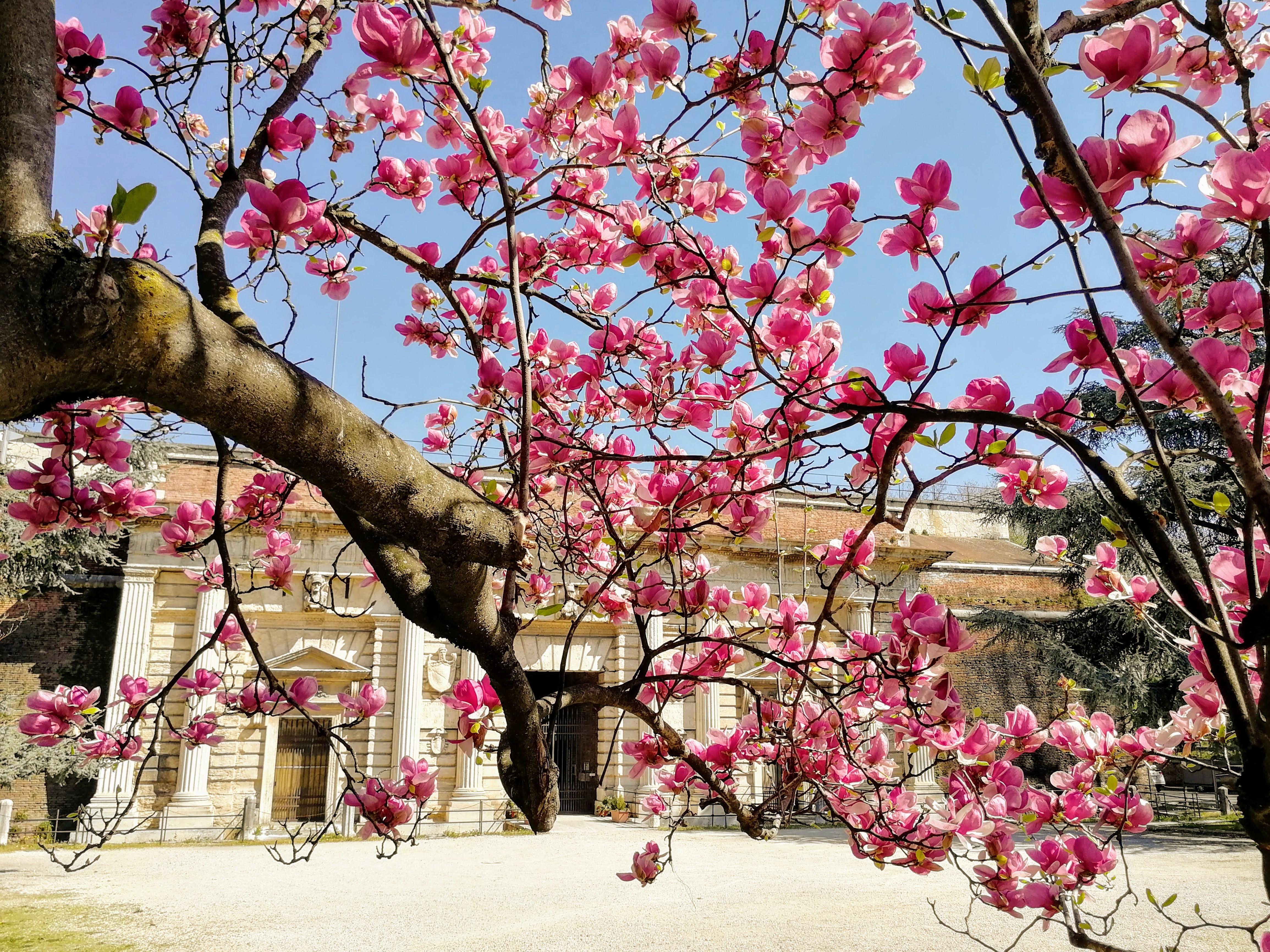 Che bel sabato di Primavera!